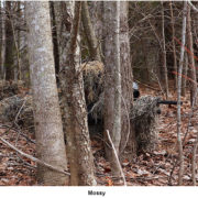woodsman-ghillie-suit-mossy-3